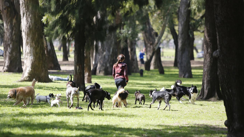 paseadores-de-perros-4