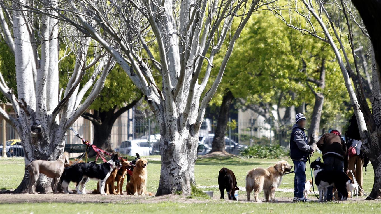 paseadores-de-perros